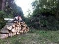 Baumverschnitt
