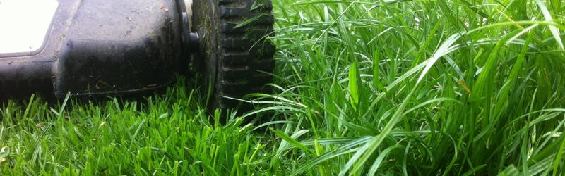 Rasenmähen – Der Sommer ist nah, der Rasen grün?