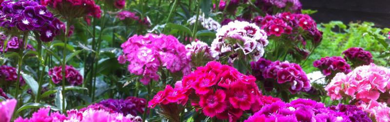 Garten- und Pflanzenpflege – Blütenzauber in Leipzig