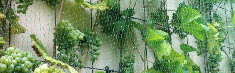Herbst – Pflanzenpflege & Verschnitt