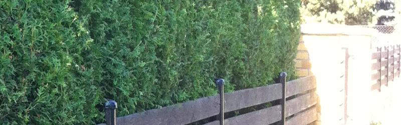 Zeit für Ihre Hecke – Baum- & Heckenpflege
