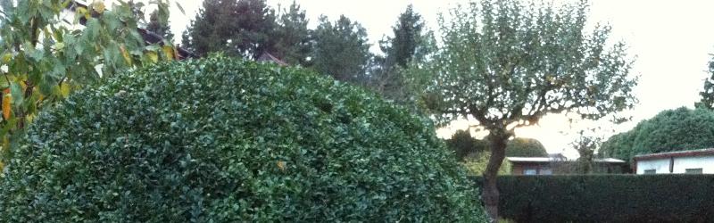1. Oktober – Hecken-, Baum- und Strauchverschnittsaison