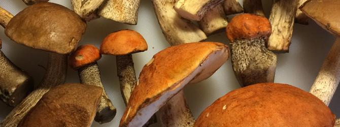 Pilzsaison – Wo waren Sie auf Suche ?
