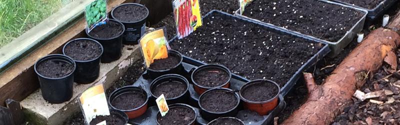 Küchenkräuter, Gemüse Aussaat im März