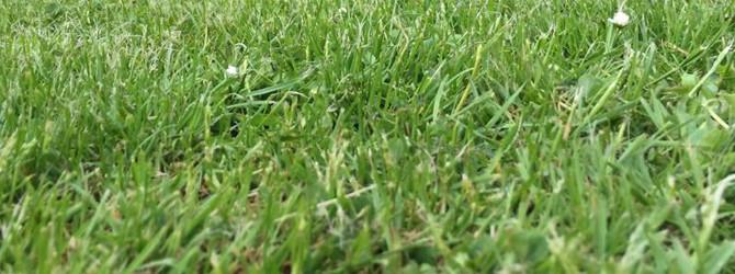 Noch kein Rasen gemäht?